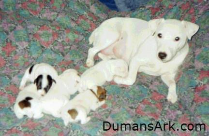 Pinemeadow Heidi Rose & Puppies