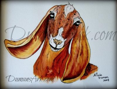 Nubian Goat Watercolor by DumansArk.com